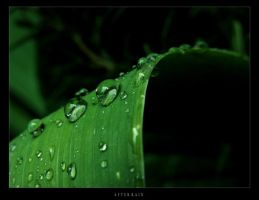 after rain by vallanthe