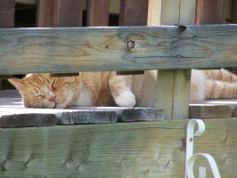 Cat On A Hot Deck... Roof? by ByronGiant