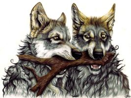 Wolfbrothers by SteelC