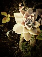 Garden Actions: VI by ToLoveTwentyNine