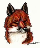 Red Fox by chezarawolf