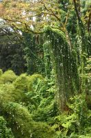 Rain forest 4 by CAStock