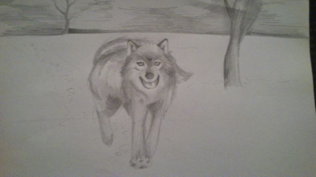 wolf #2 by paulinapin