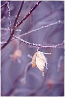 frost 1 by wildtea
