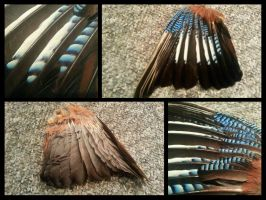 Eurasian Jay Wing by RaptorFeather