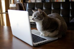 Browsing Internet cat by Lowdope