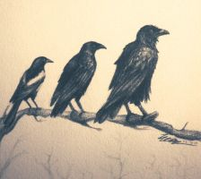 Corvidae by Tales-of-Torment