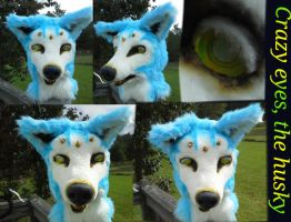 for sale---crazy eyes, the husky by TwistedLunatic