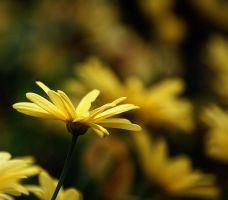 a side of yellow by awjay