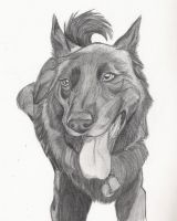 Peppercorn...Graphite by Lady-Puma