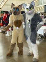Anthrocon 2013: The Cranky Cats by CinemaSpeaks