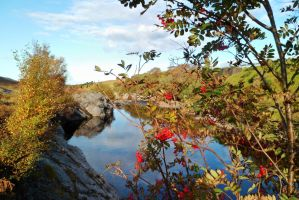 Rowan berries by the Daill river by merearthling