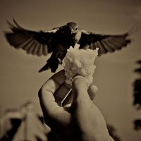 Trust me once more by Nile-Paparazzi