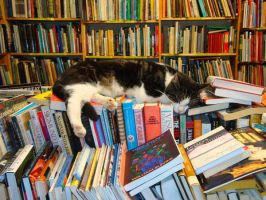 Best to Let Sleeping Cats Lie by Loralthea