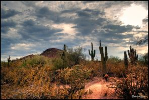 Stormy desert HDR by andrearossi