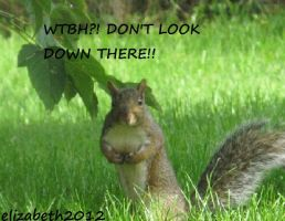 Female Squirrel With a Message by lizzy905