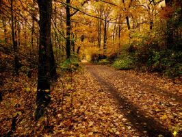 Autumn Trail by S-H-Photography