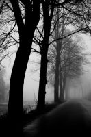 foggy 2 by mr-kreciu