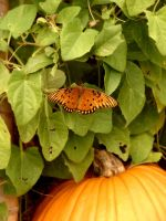 A pumpkin and a butterfly by IntelligentZombie