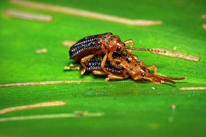 Insects 52 by josgoh