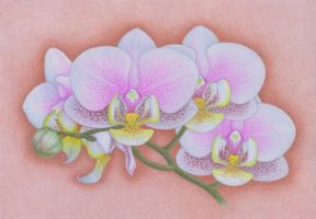 Orchids by winry7405