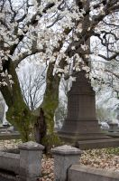 The Laurel Hill Cemetery 18 by FairieGoodMother