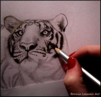 Tiger Sketch by Bonniemarie