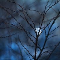 Touch Of Winter XX by JoannaRzeznikowska