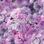 Spring by shirlsgalaxies