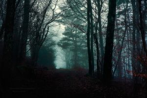 Dark Woods Has No Silence by HiawathaPhoto