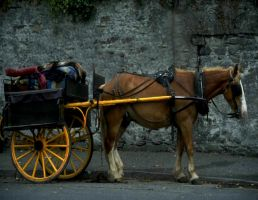 Horse and buggy by Star-Grace