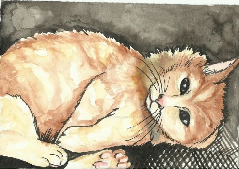 Cat by NataliaSantos