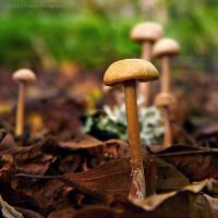 Forest Shrooms by FreyaPhotos