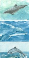 Dolphins by Pannya