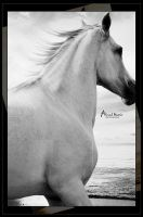 Arabian horse Black and white by Ahmed-Matrix
