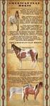 The American Clay Horse -Breedsheet- *OLD* by 11IceDragon11