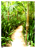 Rainforest Trail by gray929