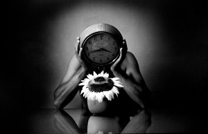 Watching the sunflower by WENZER