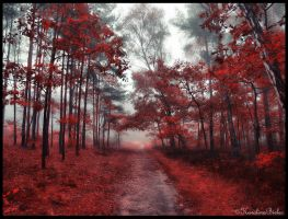 Red forest by carolinbie