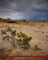 Chaco tree by spidrz06
