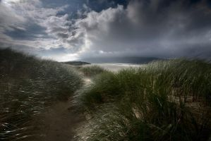Amongst the dunes by TristanCampbell