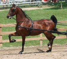 Saddlebred 68 by FantasyDesignStock