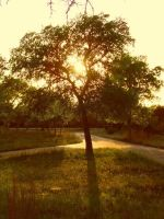 The Sunset Tree by TheGerm84