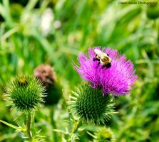 Prickly Beauty by GlassHouse-1