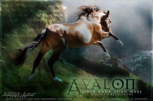 Avalon by Impressive-Instant
