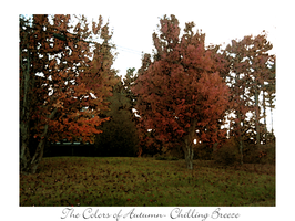 The Colors of Autumn v2 by shylittleghost