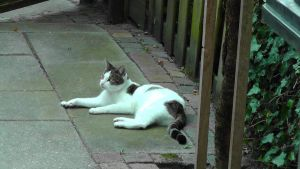 Augustus 2012 - Unknown Cat 1 by Herdervriend