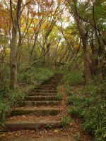 Steps in the Forest by MIUX-R