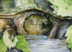 Snapping Turtle by Aaron-con-pollo