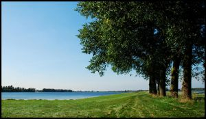 Trees at the River Lek by jchanders